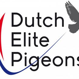 Dutch Elite Pigeons